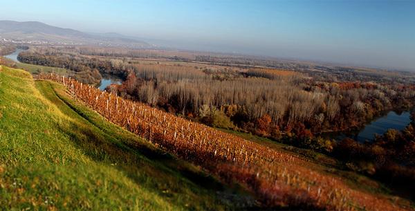 Magyar pincészet a World's Best Vineyardon
