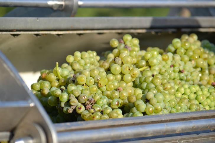 Az utolsó cseppig tele a pince, a borok egyelőre kimagaslóak