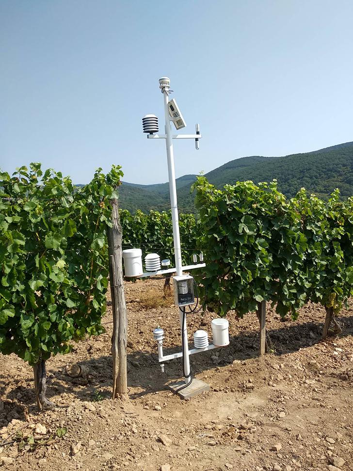 Kutatók kiszámolták, melyik szőlőfajták tűnnek el hazánkból a század végére
