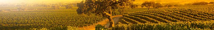 Az éghajlatváltozás kihívások elé állítja a szőlő- és borágazatot világszerte