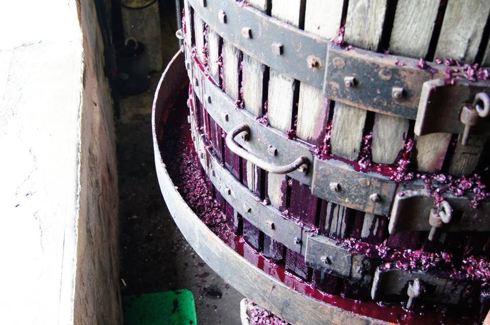 Új szőlőfajta születik Bordeaux-ban?