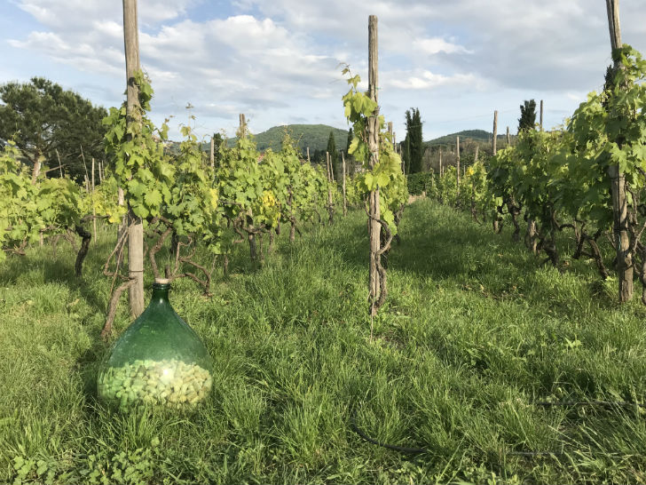 Frascati: frissítő fehérborok a Vatikán szomszédságában