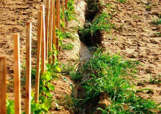 Klímaváltozás és erózió: így pusztul a talaj Tokaj dűlőin