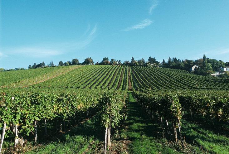 Idén nem stresszeltek az osztrák borászok