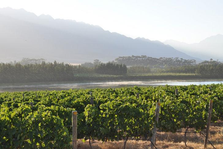 Megalapozni Dél-Afrika boridentitását