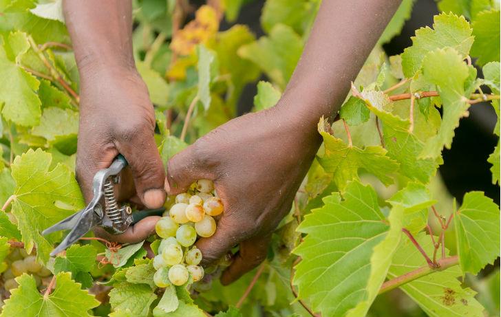 Átalakul Dél-Afrika borászata