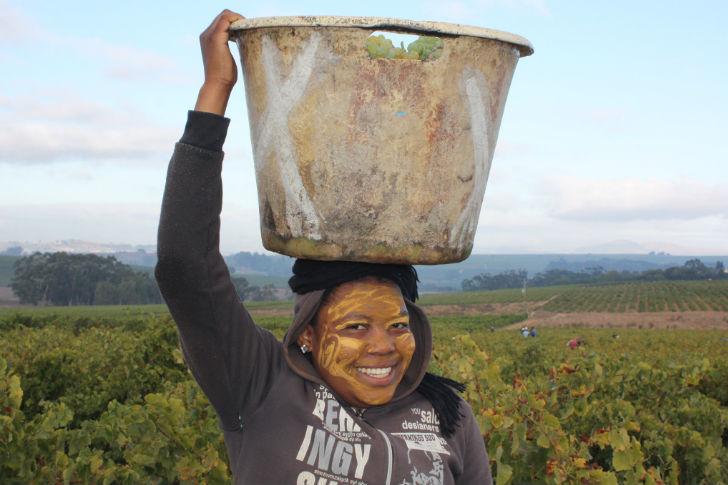Ezerarcú ökoszisztéma és borok Afrikából