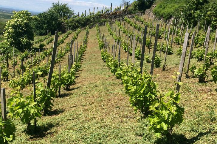 A borértők kedvenc idei cikkei