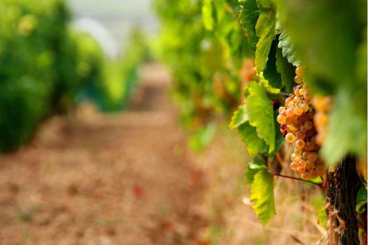 A bor területalapú megközelítéséről