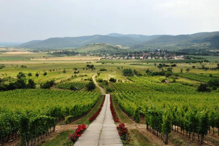 A település és bora, mint önálló márka
