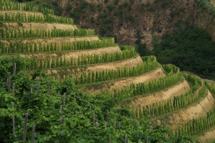 Mit tudnak a löszön termett tokaji borok?