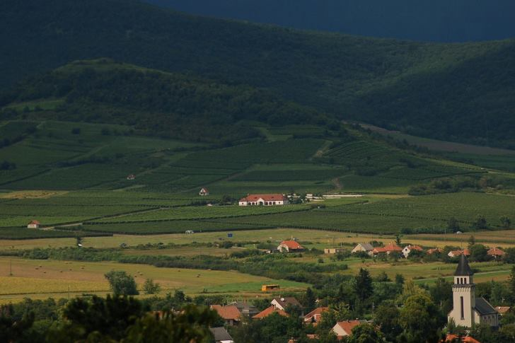 Életpálya-program, közösségi borüzem, állami földalap készül Tokajban