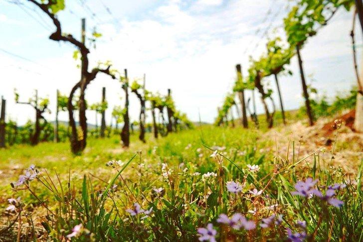 Első osztályú borok egy első osztályú dűlőből