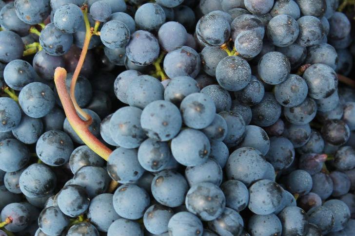 Így (nem) lesz a szép szőlőből ízgazdag bor