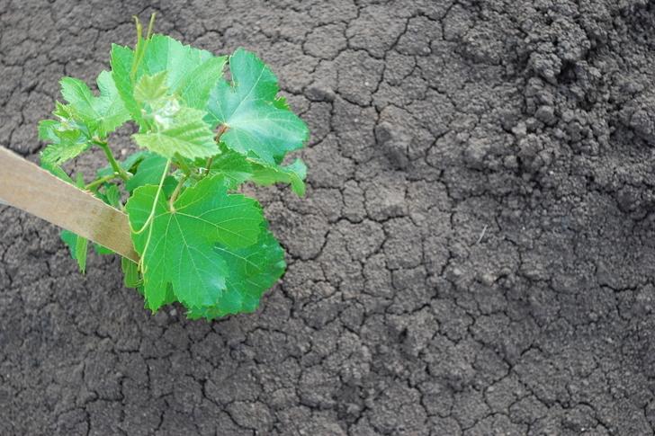 A klímaváltozás itt van: mit kezdjünk a szárazsággal?