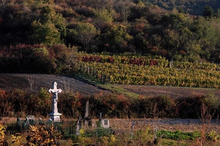 A borágazat minden szeletében megújulásra szorul