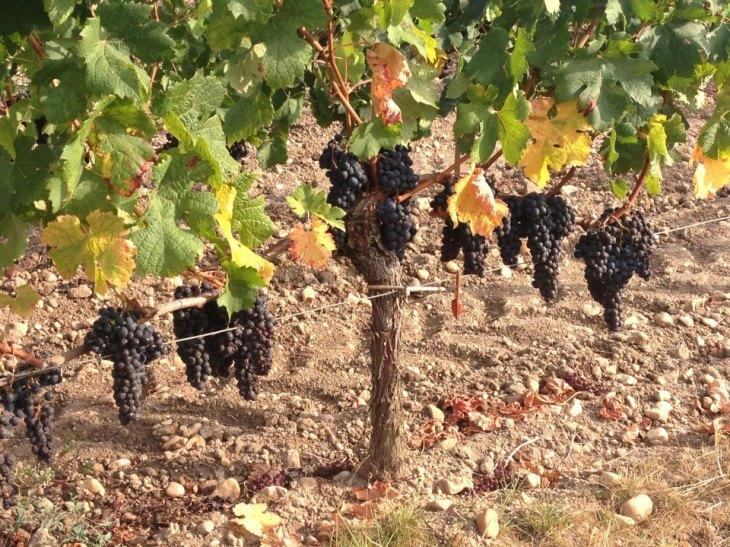 Bordeaux-nak ettől megy jól