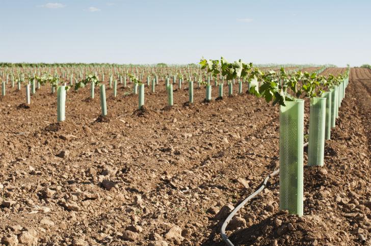 Akár 75 millió forintos támogatást is kaphatnak a szőlősgazdák