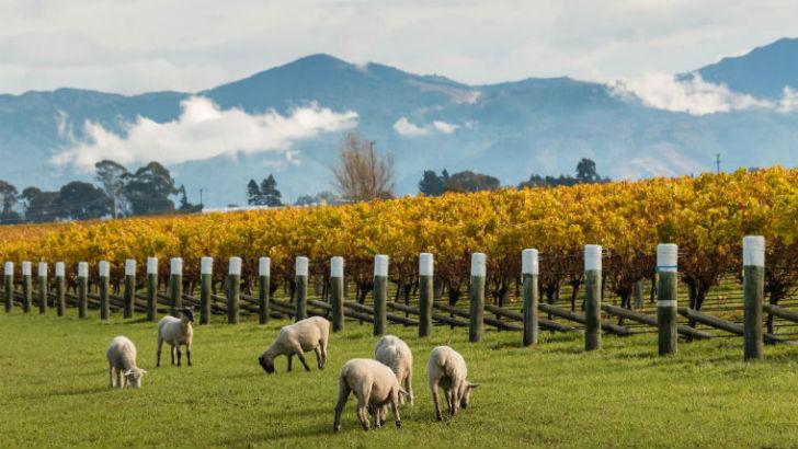 Új-Zéland csak egy karnyújtás